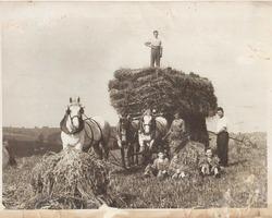 VILLIERS - ILLOIS - Récoltes de blé en 1945