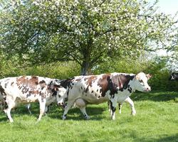 Fromagerie Villiers - Illois - Alimentation et conduite du troupeau